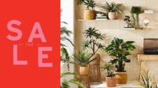 SAVE 20% on Pots, Plants & Plant Stands